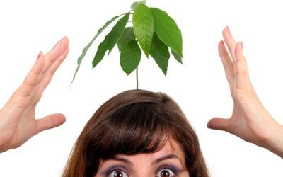 Fotosyntese – hva er det?