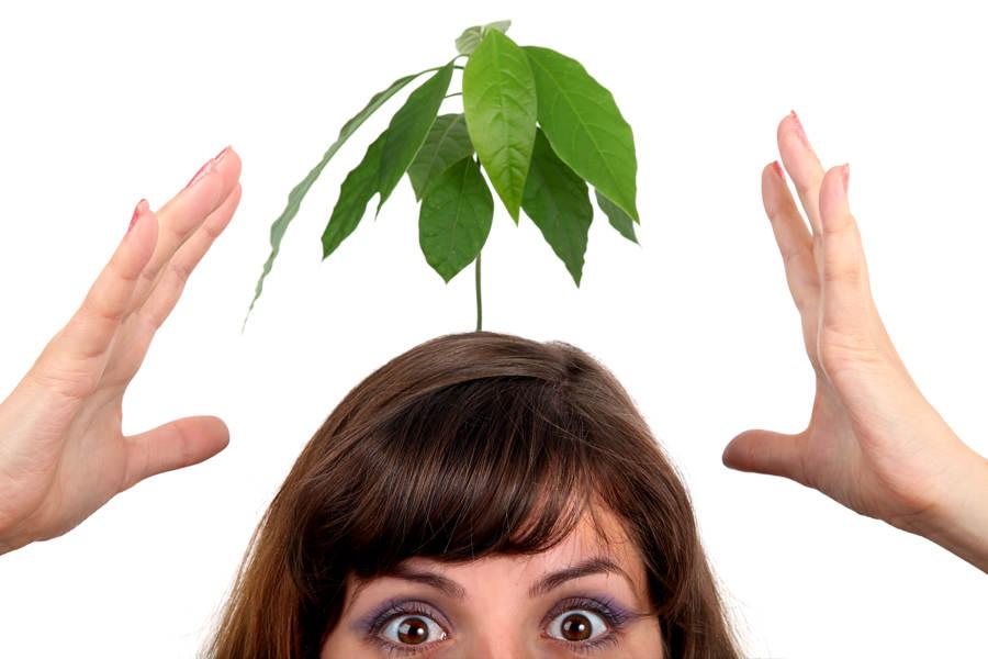 Fotosyntese - hva er det?